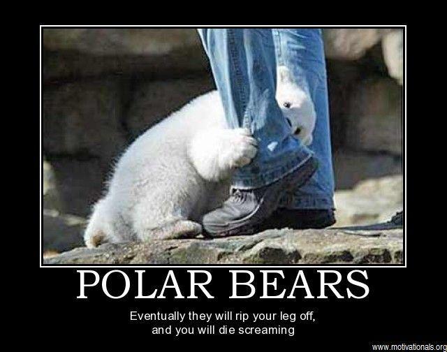 bear 10