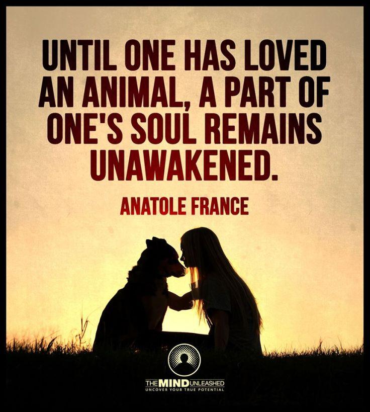 loved animal