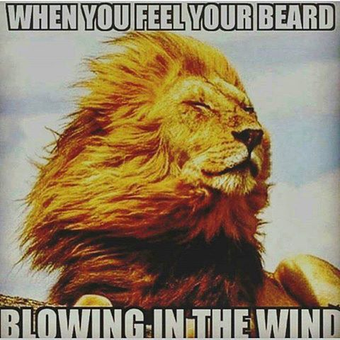 blowing-in-the-wind